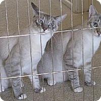 Adopt A Pet :: Ben & Jerry - Lakewood, CA