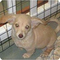 Adopt A Pet :: Cooper - Adoption Pending! - Antioch, IL