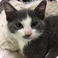 Adopt A Pet :: Gerzelda - Medina, OH
