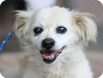 Spaniel (Unknown Type) Mix Dog for adoption in Canoga Park, California - Wags
