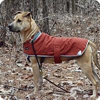 Adopt A Pet :: Romeo - Millersville, MD