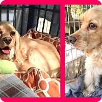 Adopt A Pet :: Cash - Milton, GA