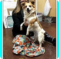 Adopt A Pet :: Happy - Greenwood, LA