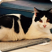 Adopt A Pet :: Saab - Lakeland, FL