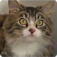 Adopt A Pet :: Puffy - Secaucus, NJ