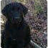 Adopt A Pet :: Violet - Staunton, VA