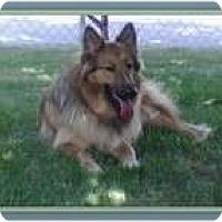 Adopt A Pet :: Stevie - Trabuco Canyon, CA