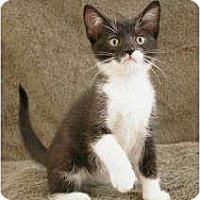Adopt A Pet :: Nibbles - Sacramento, CA
