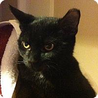 Adopt A Pet :: Patch - Alexandria, VA
