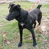 Flat-Coated Retriever Mix Dog for adoption in Prestonsburg, Kentucky - mailbox