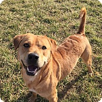 Adopt A Pet :: Benny - Russellville, KY