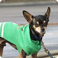 Adopt A Pet :: Tyson - Meridian, ID
