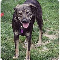 Adopt A Pet :: Sandy-Adoption Pending - Fredericksburg, VA