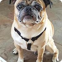 Adopt A Pet :: Max - Huntingdon Valley, PA