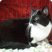 Adopt A Pet :: Ziba - Montreal, QC