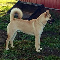 Adopt A Pet :: Smallz - Courtesy Listing - South Amana, IA