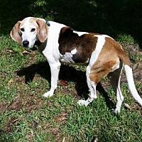 Adopt A Pet :: Sweetie - Tampa, FL