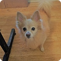Adopt A Pet :: Spaulding - conroe, TX