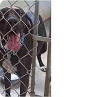 Adopt A Pet :: BeBe - Eustis, FL
