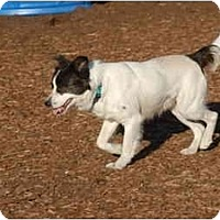 Adopt A Pet :: Blazer - Ft. Myers, FL