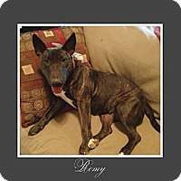 Adopt A Pet :: Remy - Sachse, TX