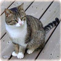 Adopt A Pet :: K.C. - Howell, MI