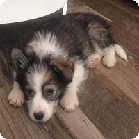 Adopt A Pet :: Megan - Woodstock, ON