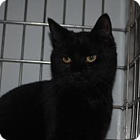 Adopt A Pet :: Ollie - Lafayette, NJ