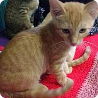 Adopt A Pet :: Chex - Seminole, FL