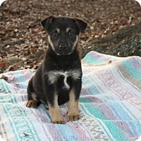 Adopt A Pet :: Lilly $250 - Seneca, SC