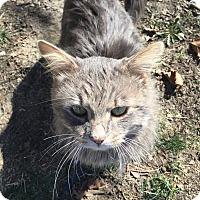 Adopt A Pet :: Houston - Newburgh, IN