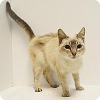 Adopt A Pet :: TONY - Sacramento, CA