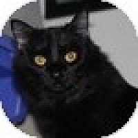 Adopt A Pet :: Flounce - Vancouver, BC