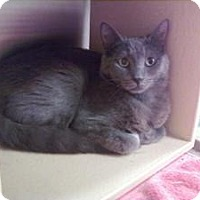 Adopt A Pet :: Angel - Fort Lauderdale, FL