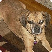 Adopt A Pet :: Nellie - Mahopac, NY