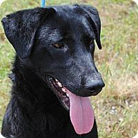 Adopt A Pet :: Toby - Cumming, GA