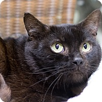 Adopt A Pet :: Elliott - Chicago, IL