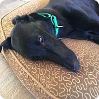 Adopt A Pet :: Mazie - Oklahoma City, OK