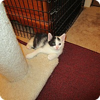 Adopt A Pet :: Sheldon - Speonk, NY