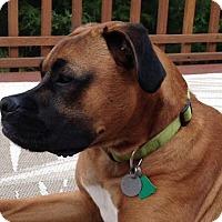 Adopt A Pet :: Zeke Jacob - Dayton, OH
