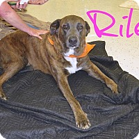 Adopt A Pet :: Riley - Scottsdale, AZ