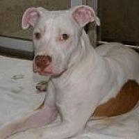 Adopt A Pet :: Guera - Duluth, GA