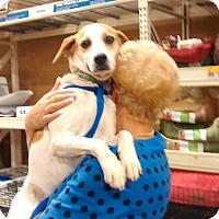 Adopt A Pet :: Mack - richmond, VA