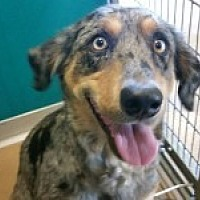 Adopt A Pet :: Caitlyn - Katy, TX