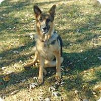 Adopt A Pet :: Shelby - Greeneville, TN