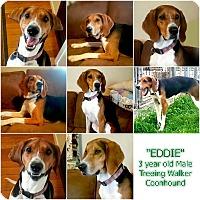 """Adopt A Pet :: """"EDDIE"""" - Findlay, OH"""