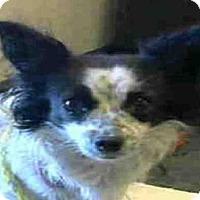 Adopt A Pet :: *PRINCESS MOUSE - Sacramento, CA