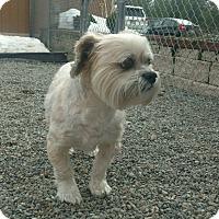 Adopt A Pet :: Cinnamon - Rathdrum, ID