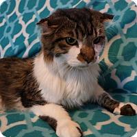 Adopt A Pet :: Lancelot - Mackinaw, IL