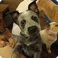 Adopt A Pet :: Moony - Garden City, NY